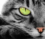 Forex Market Commentaries - Cat and Nine Lives