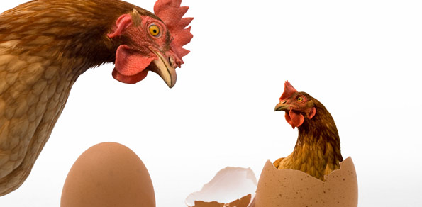 Forex Market Commentaries - The Chicken And Egg Story